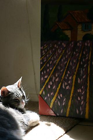 Chichi in the sun