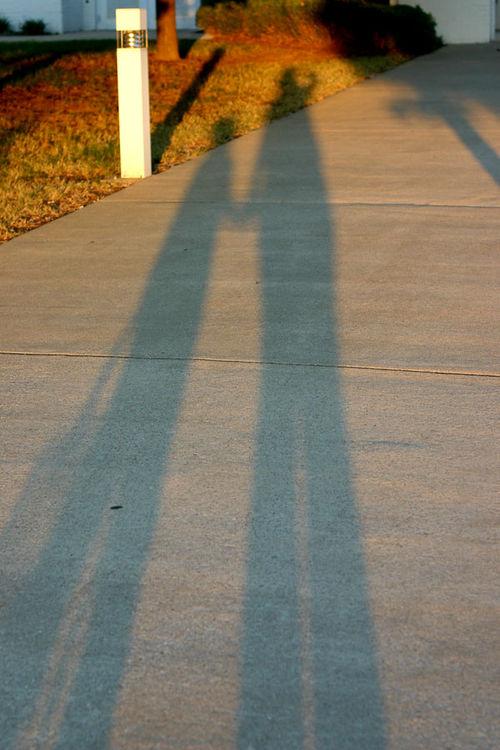 Shadows 600
