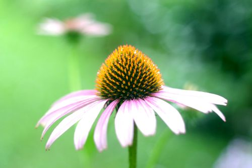 Flower 700