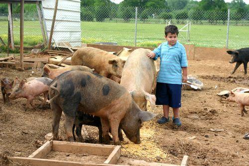 Pigsblog