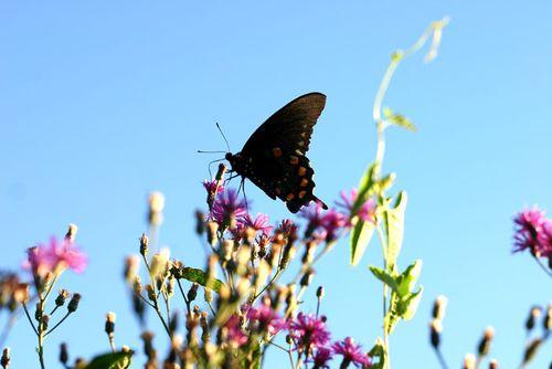Butterfly2700