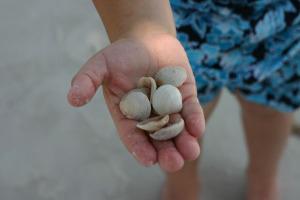 Shell_hand