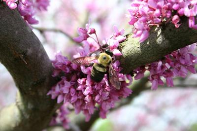 Bee_6