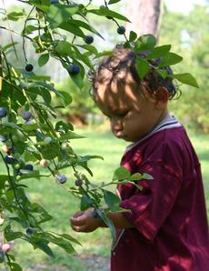 Blueberries_3